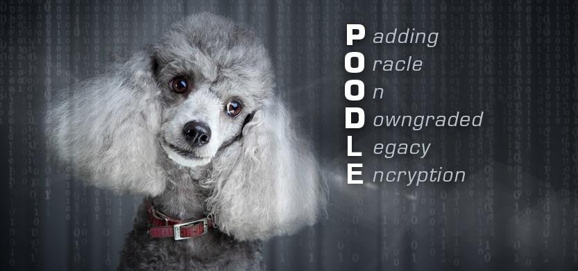 Beware of P.O.O.D.L.E, SSLv3 Vulnerability & Security Update